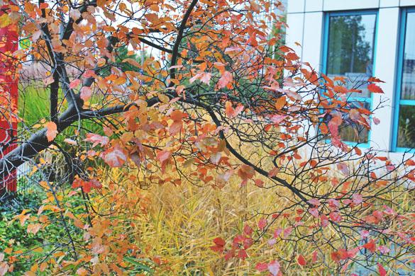 Nürnberg Autumn