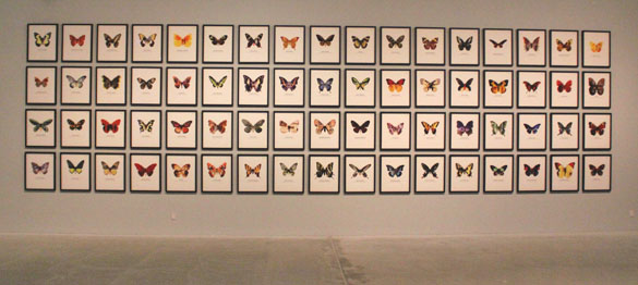artwork world of butterflies peter henckel 2